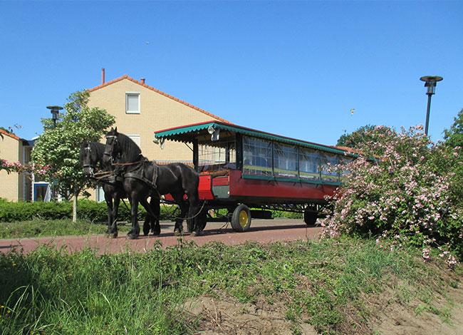 paardentram-vossenspan-12