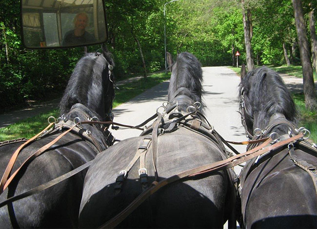 paardentram-vossenspan-6